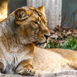 Zoo Blijdorp