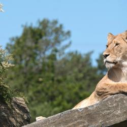 Zoo et parc d'attractions de Kristiansand, Kristiansand