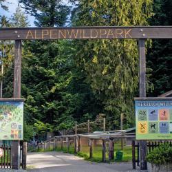 Парк дикой природы Альп «Альпенвильдпарк Пфендер»