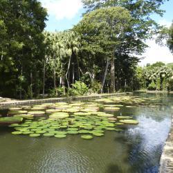 Pamplemousses Garden, Terre Rouge