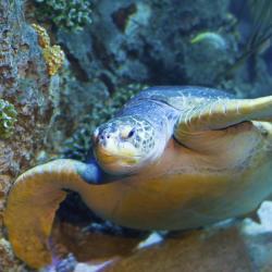 Aquarium Sea Life Paris Val d'Europe