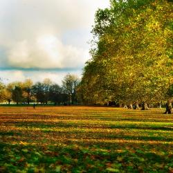 Midsummer Common