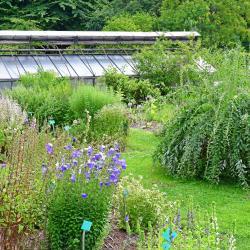Botanik Bahçeleri