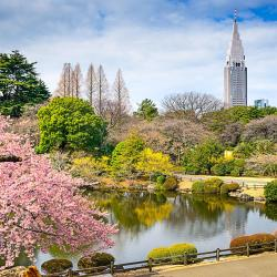 Национальный парк Синдзюку-геэн
