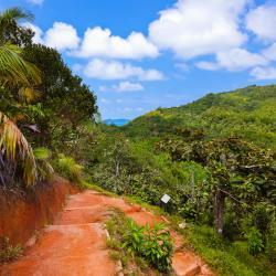 Vallee de Mai Nature Reserve, Praslin