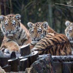 Dierenpark Amersfoort Zoo