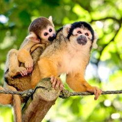 Apenheul Primate Park