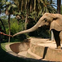 Zoo de Barcelone