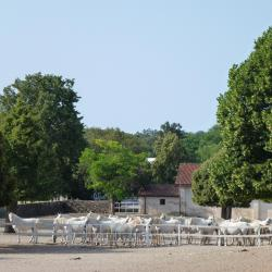 Lipica - Allevamento Cavalli Lipizzani