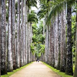 Ботанически градини Рио де Жанейро