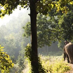 Пешее сафари, наблюдение за слонами - Ко-Чанг
