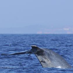 Whale Watching Mirissa, Mirissa