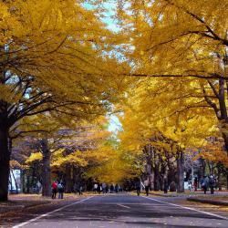 Universitas Hokkaido