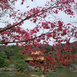 Kuil Kinkaku-Ji