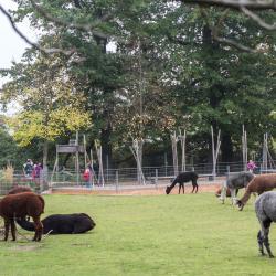 Зоологическо-ботанический сад «Вильгельма»
