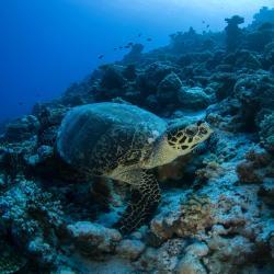 Male Atoll 10 homestays