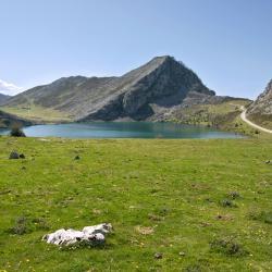 Asturië 508 villa's