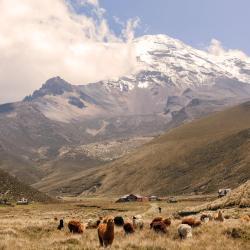 Chimborazo Province 4 apartmány
