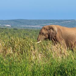 Addo Elephant Park 30 bed and breakfasts