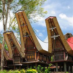 Sulawesi 6 albergs