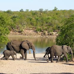 Kruger National Park 10 hostels