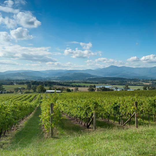 Weinregion Yarra Valley