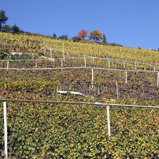 Vīnu degustēšana Visperterminenā