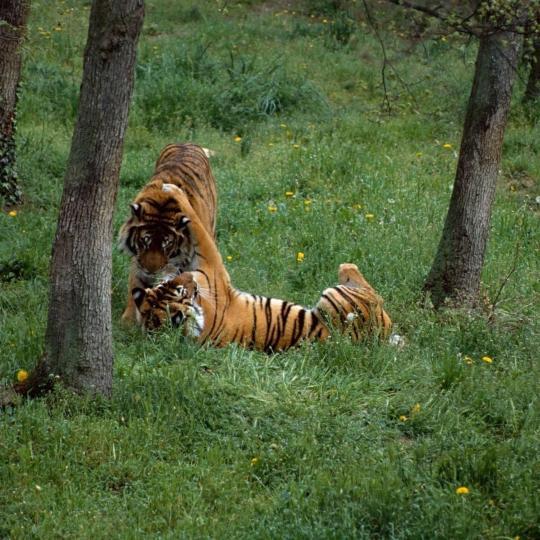 Peaugres Safari Park