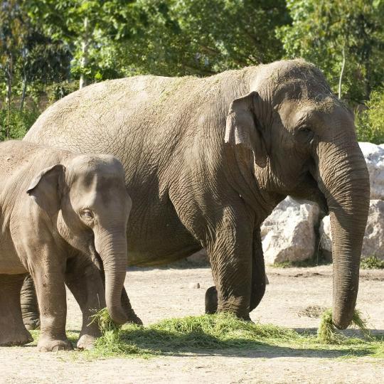 Tierpark Le Pal