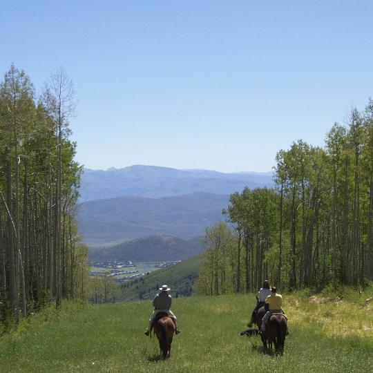 Верховая езда в Вогезах