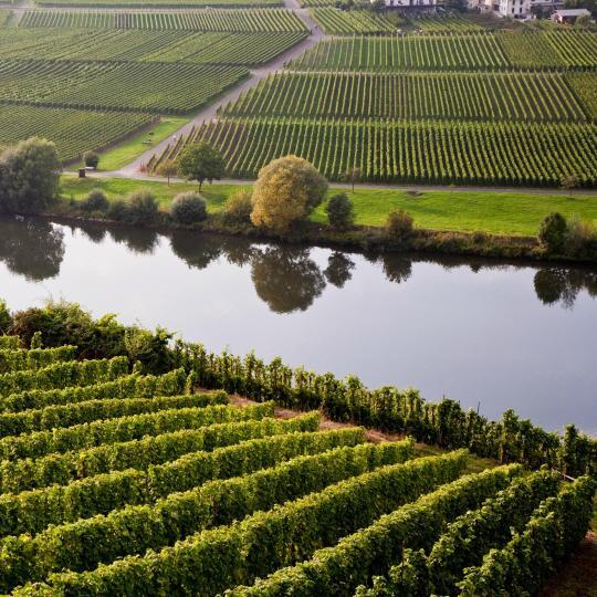 Wine hop along the Moselle