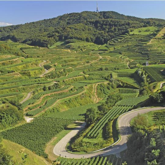 Die malerische Badische Weinstraße entlangfahren