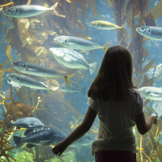 Aquarium ng Genoa