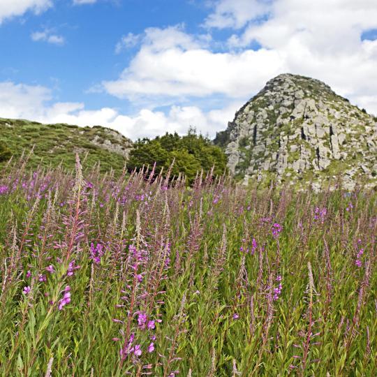 Climb the Mont Gerbier-de-Jonc