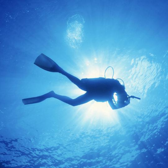 Diving in Mazarrón Bay