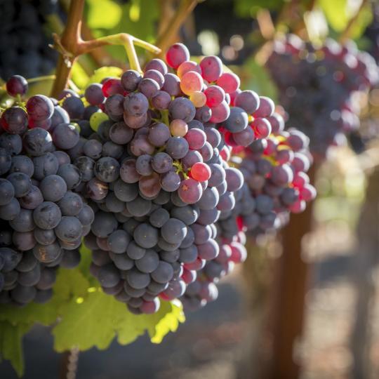 Goûtez les vins de la région