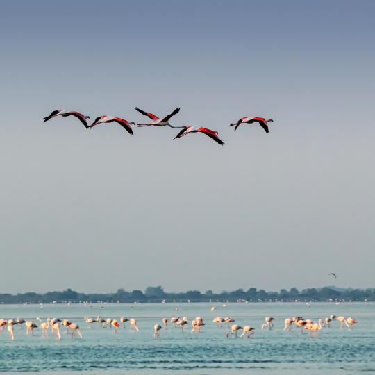 The Camargue Regional Nature Park
