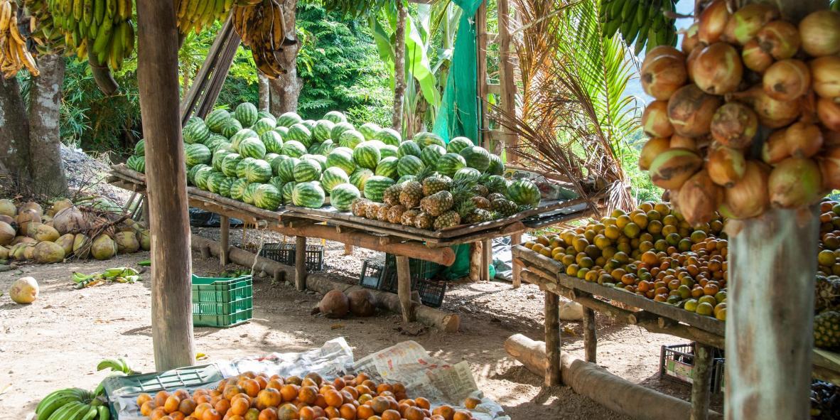 Santa Elena Farmers Market