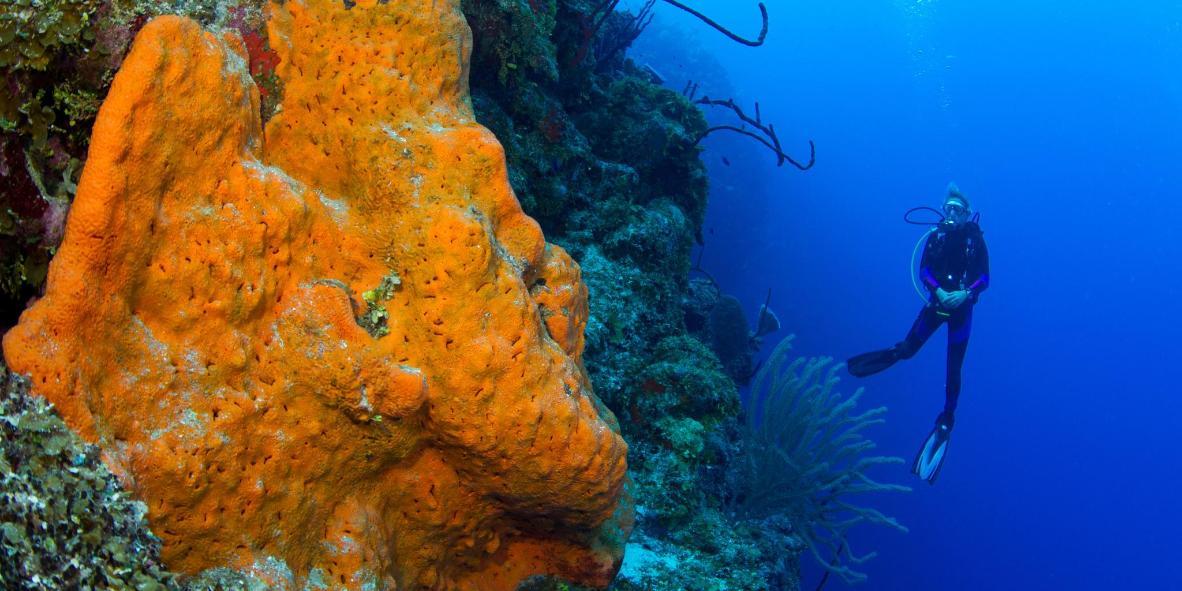Blue Wall Reef