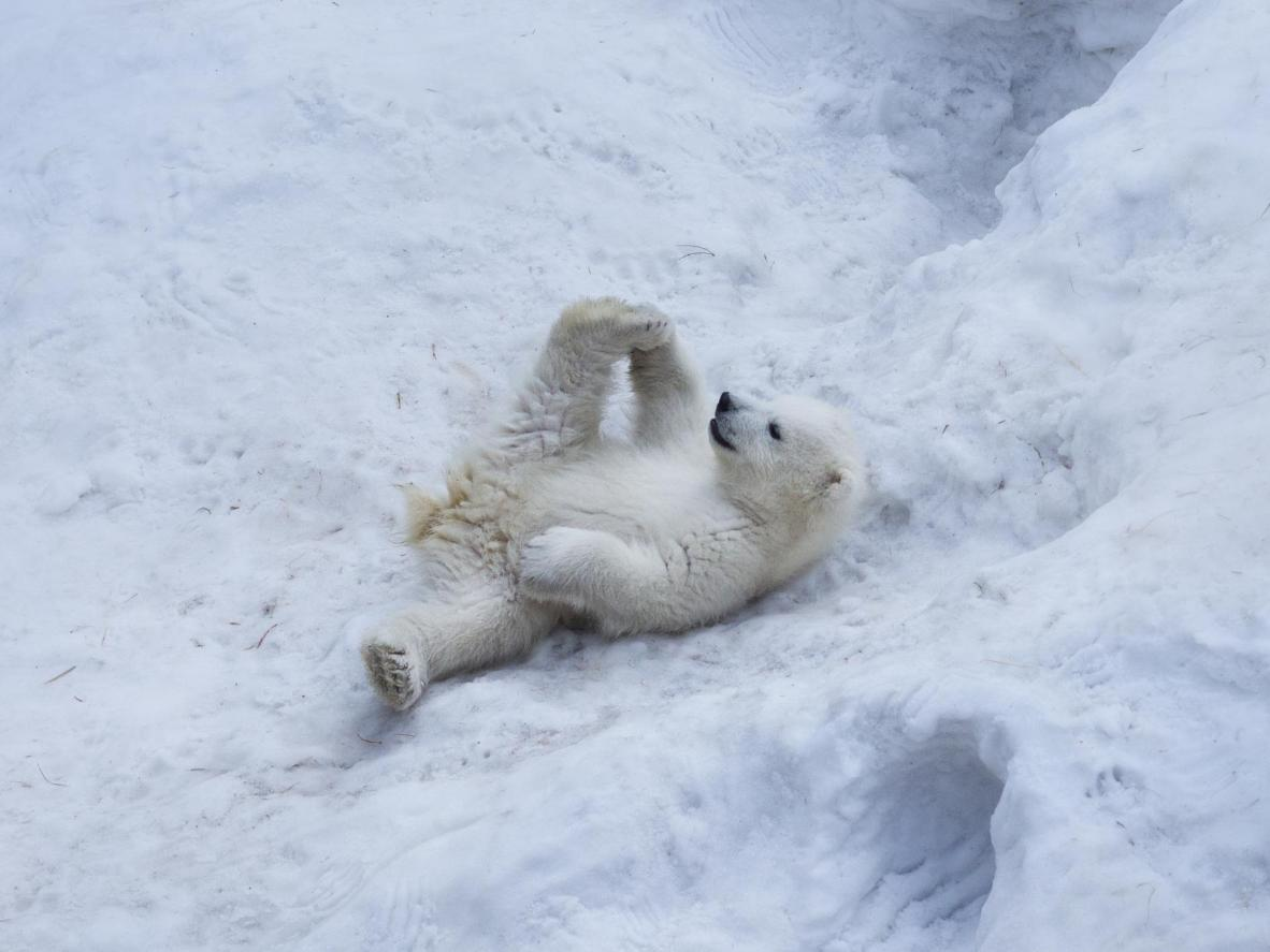 Be aware that frigid winter temperatures may limit the time some animals spend outdoors