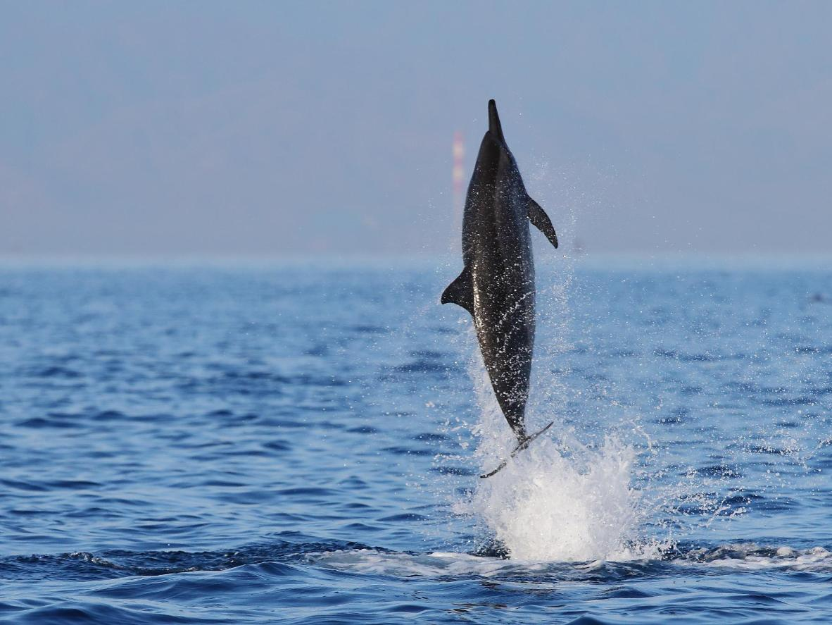 Witness the beauty of wild dolphins at destinations around the world