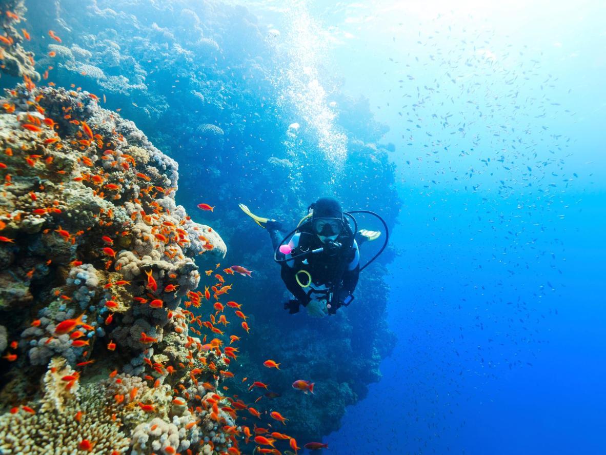 La costa de Cuba alberga miles de millas de arrecifes de coral.