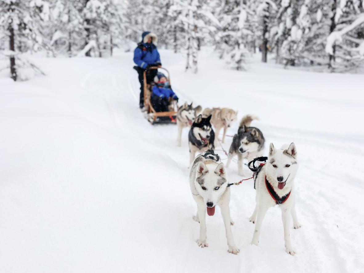 Hard-working pups in Levi, Finland