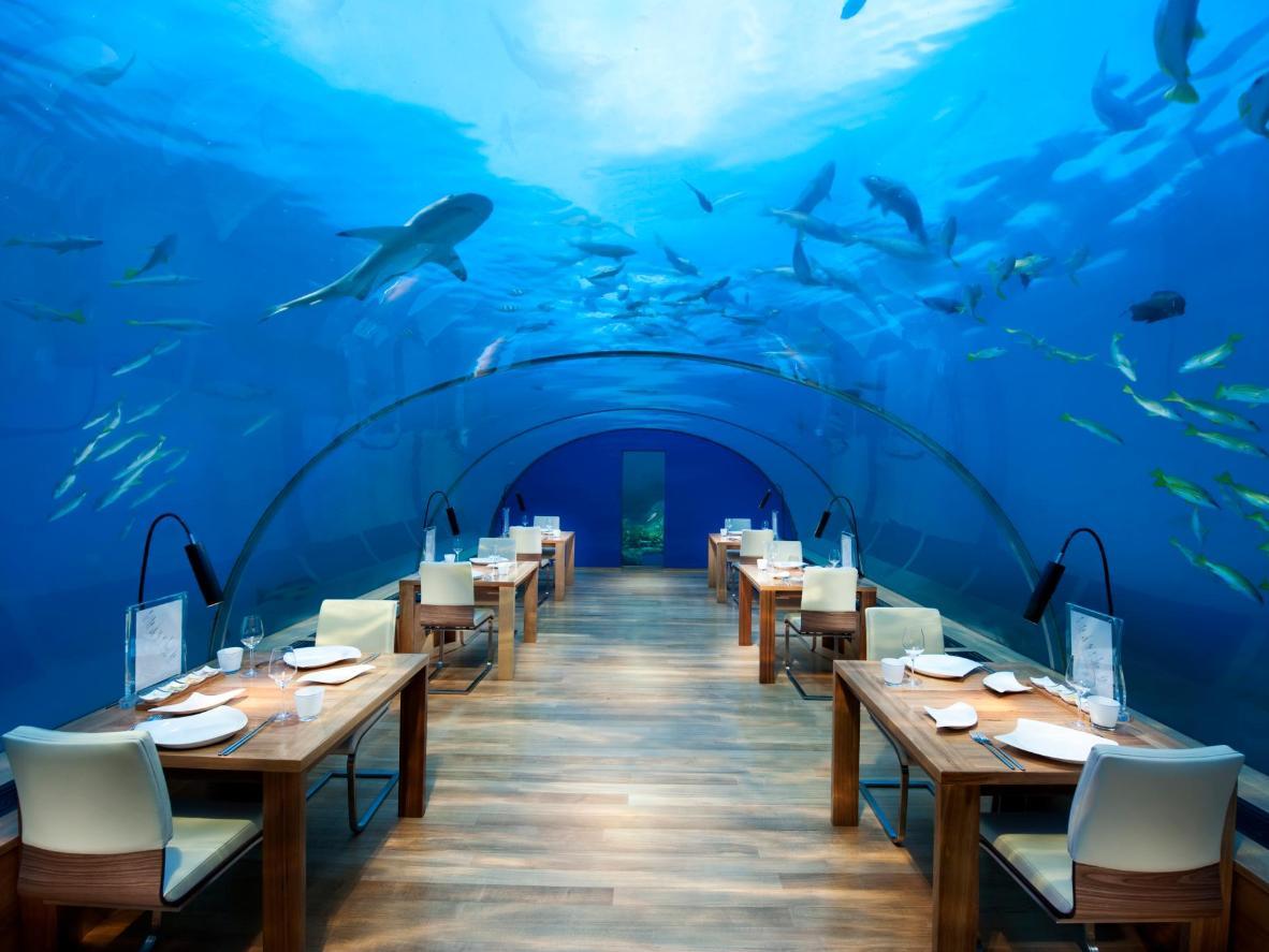Dining with the sharks on Rangali Island