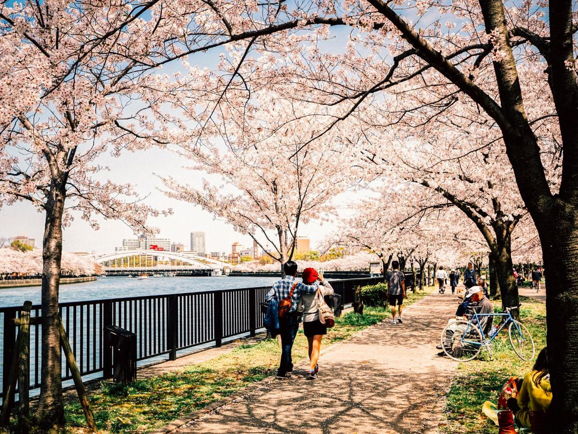 Or Walk The Philosopheru0027s Walk, A Canal Lined With Cherry Blossoms,  Creating A Dazzling, Light Pink Canopy And Dappled Sunshine.