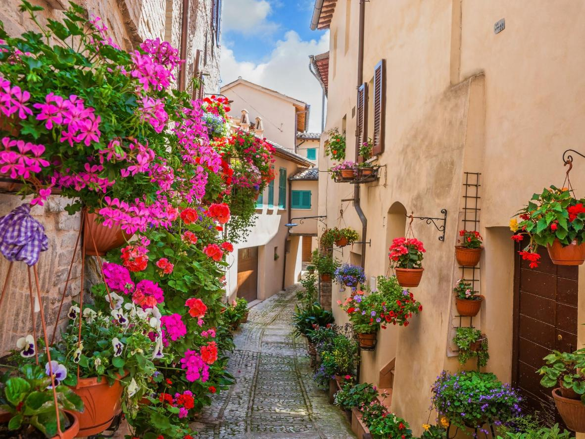 The world s top 5 destinations for spring flowers