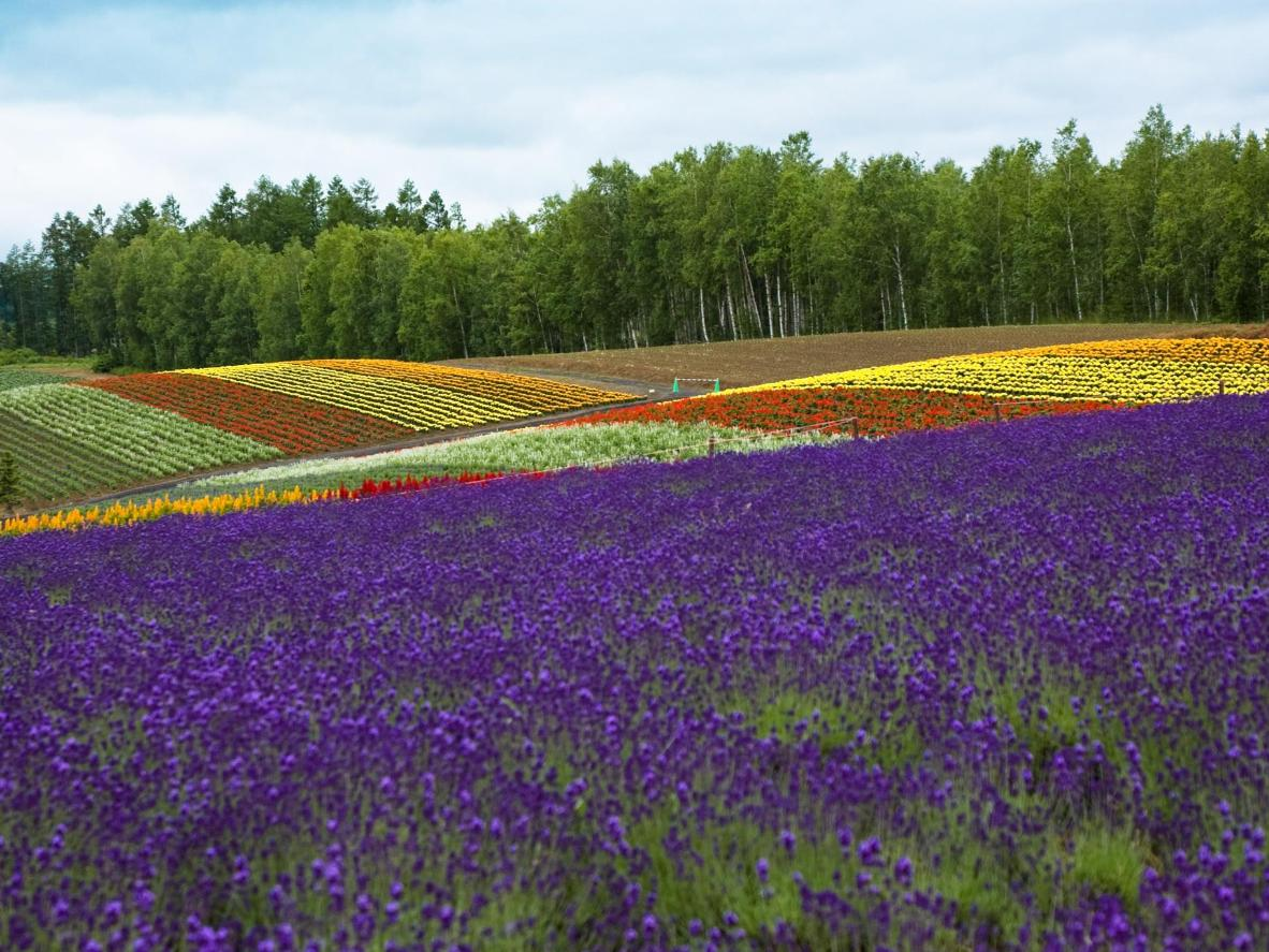 The World S Top 5 Destinations For Spring Flowers Booking Com