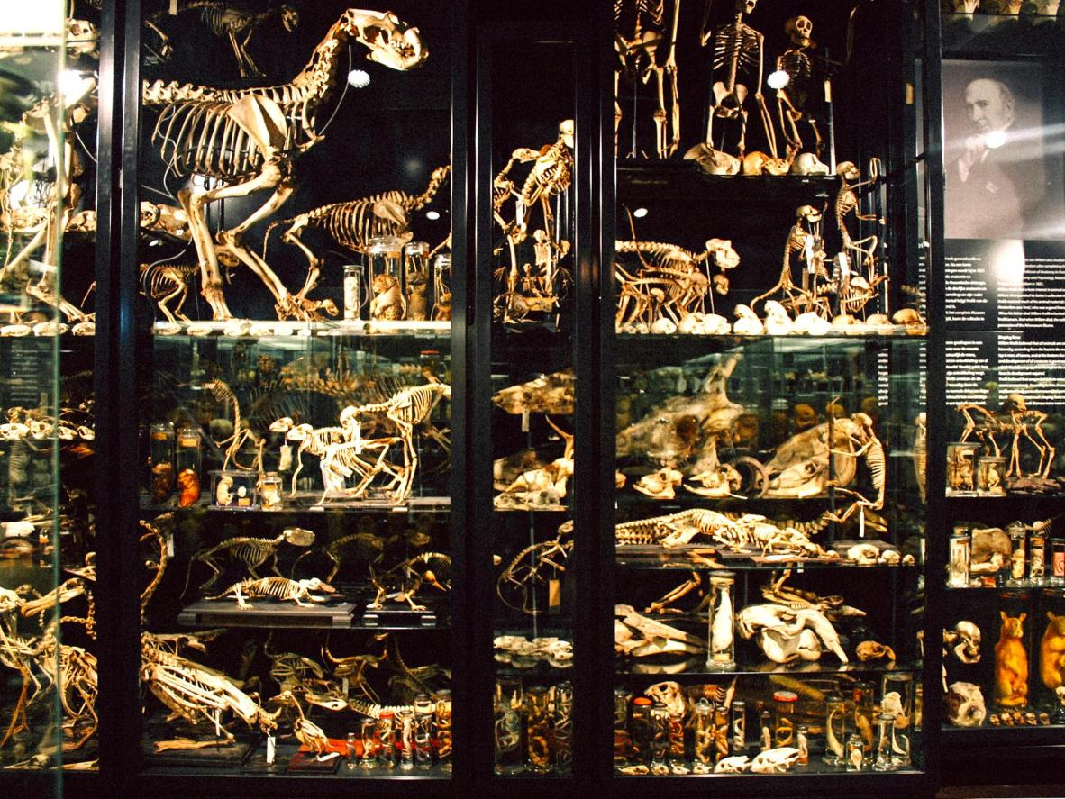 This namesake museum exhibits the Vroliks vast collection of anatomical specimens
