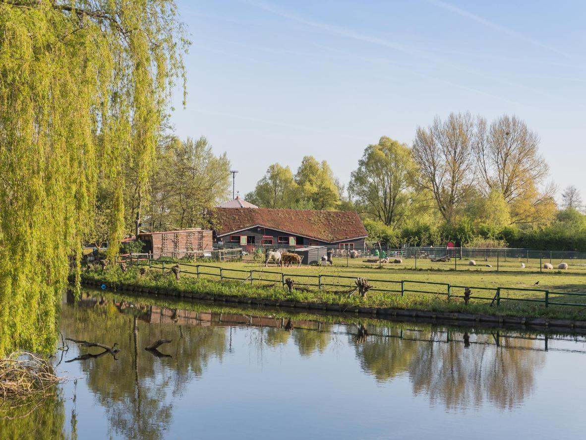 The Westerpark Boerderij petting farm