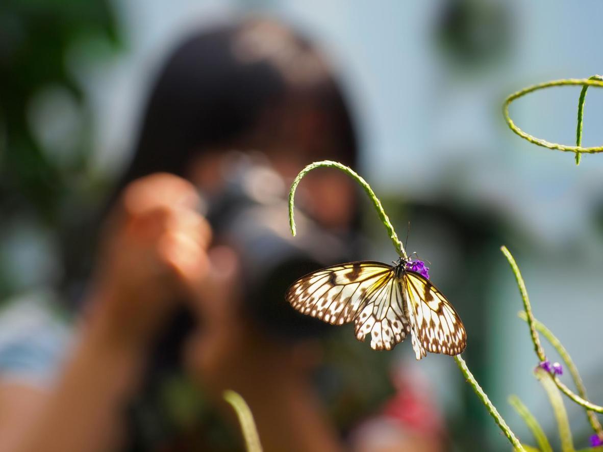 Fotografiando mariposas en la Reserva Nacional Tambopata